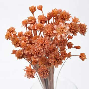 Dried Brazilian Flowers
